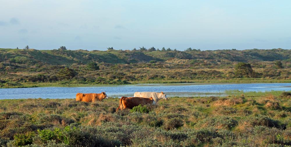 Udsigt over Vandplasken mod øst. Den gamle havskrænt fra Stenalderhavet ses tydeligt i baggrunden.